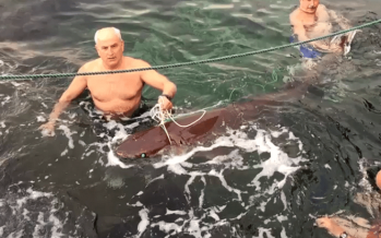 فيديو تعذيب سمكة قرش... هل