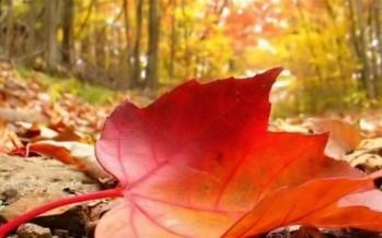 طقس تشرين دافئ... والحرارة فوق معدلاتها الموسميّة!