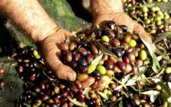 انطلاق موسم قطاف الزيتون في محافظة النبطية الإنتاج متوسط وسعر صفيحة الزيت بلغ 600 ألف ليرة