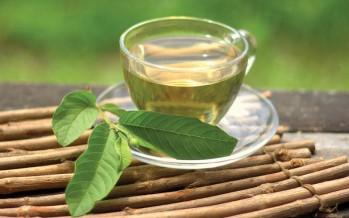 فوائد أوراق الجوافة لمرضى السكري والكولسترول مذهلة