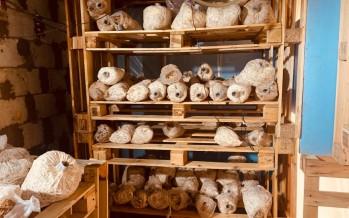 الفطر السحري... مادّة مخدّرة نادرة ضُبطت في منزل مُعدّ للزراعة في بلدة زبدين - النبطية