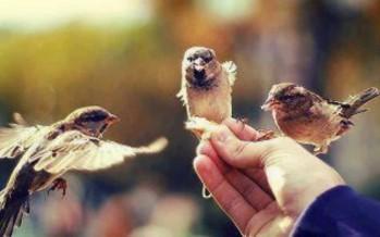 هي العصافير..