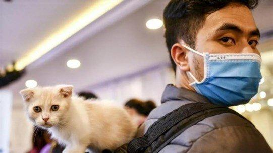 القطط أكثر عرضة للإصابة بـ