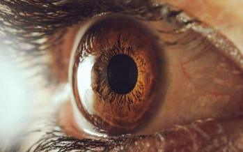 أصحاب حدقة العين الكبيرة أكثر ذكاء
