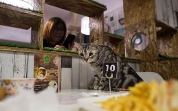 مقهى للقطط.. في بيروت