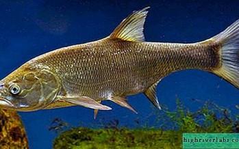 سمكة تقفز داخل فم صياد هرباً من الصنارة