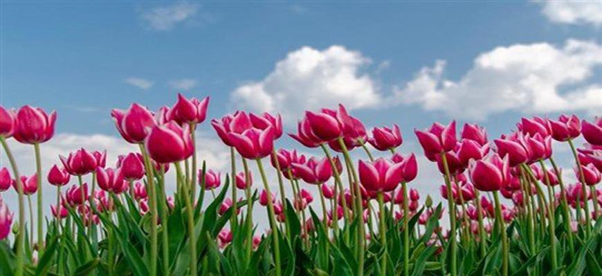 طقس ربيعي في أواخر أيار...